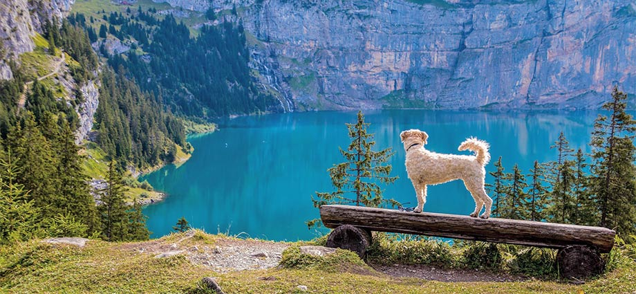 Urlaub mit Hund in der Schweiz